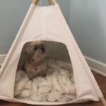 Stassi Schroeder's Pet Teepee on Bravo's Tour of Her Apartment